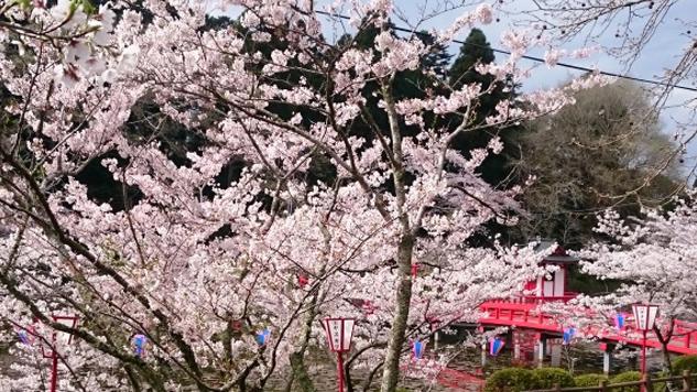 4月13日(木)の開花状況