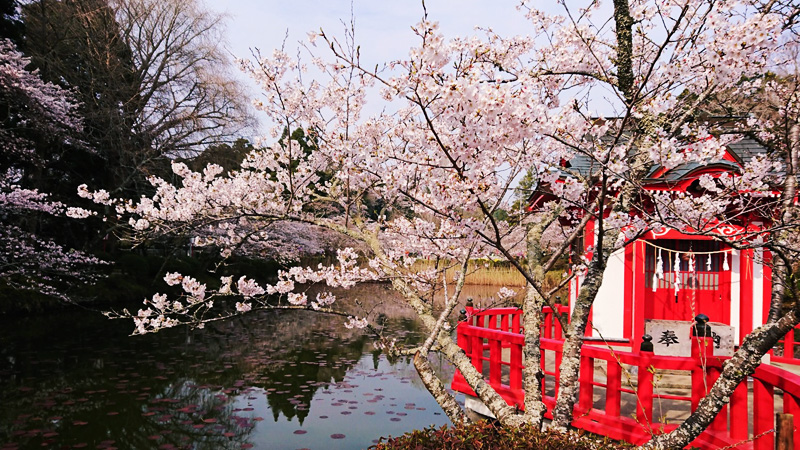 3月26日(月)の開花状況