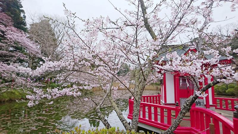 4月07日(金)の開花状況