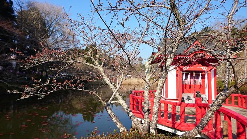 3月30日(木)の開花状況