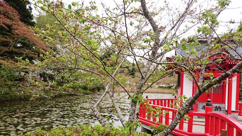 4月05日(木)の開花状況