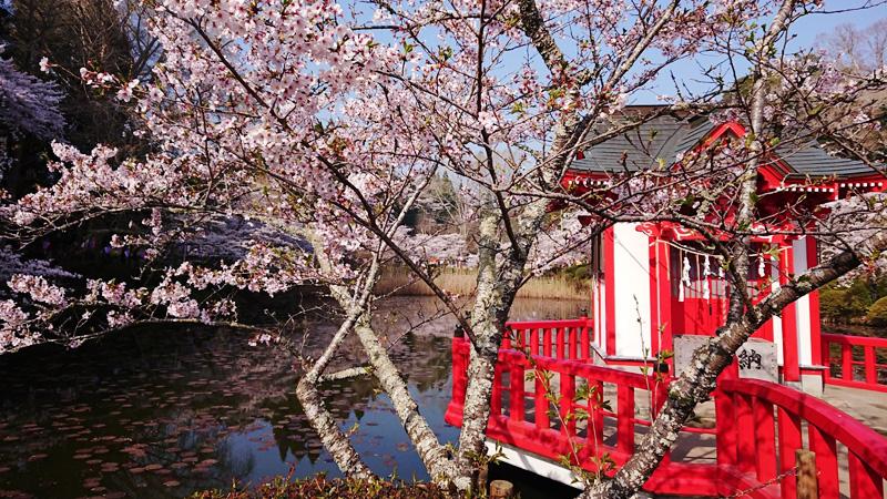 3月29日(木)の開花状況