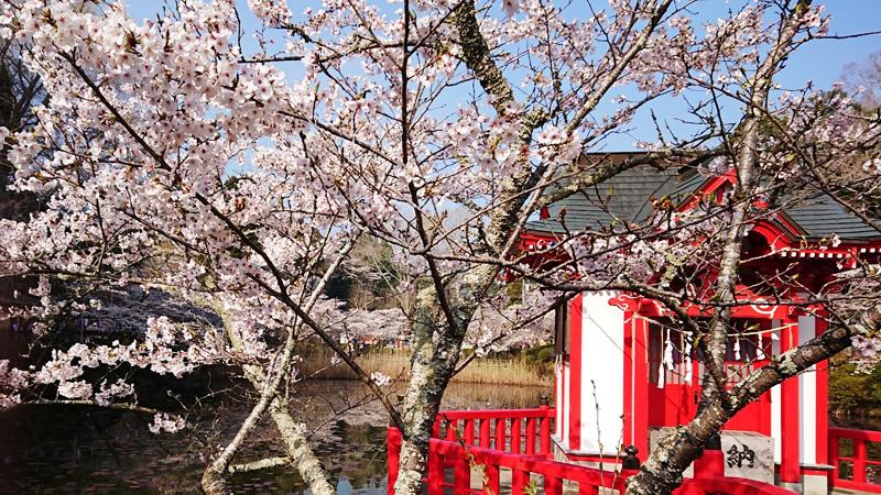 3月27日(火)の開花状況