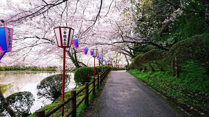 4月12日(水)の開花状況