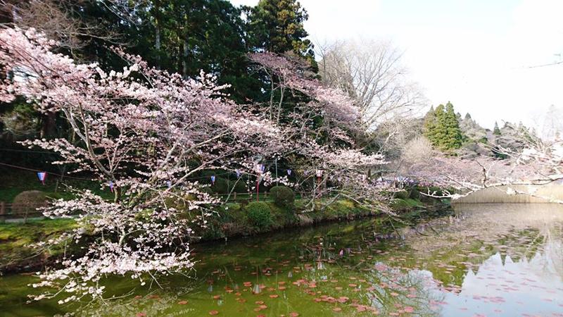 4月06日(木)の開花状況