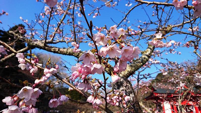 4月04日(火)の開花状況