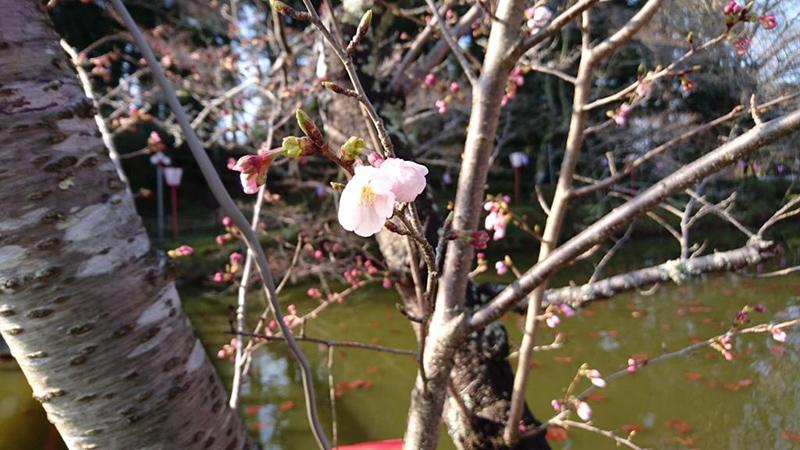 3月28日(火)の開花状況