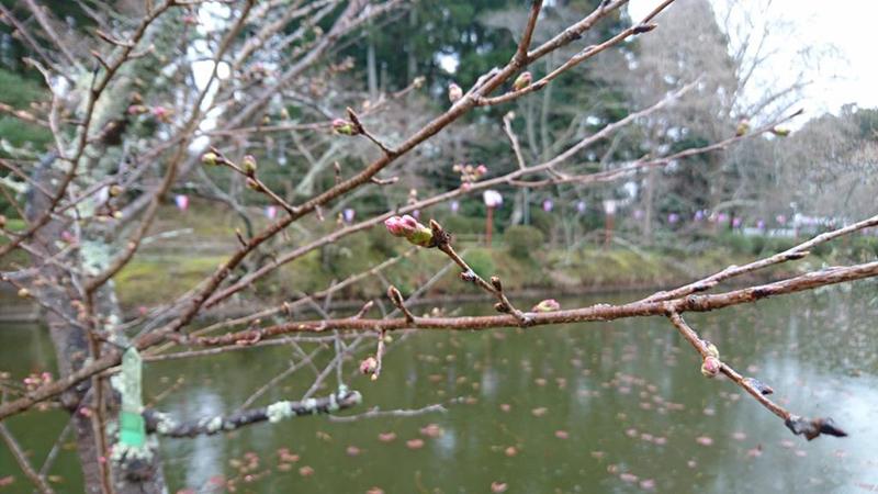3月21日(火)の開花状況