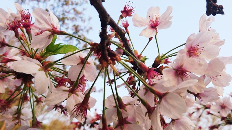 4月04日(水)の開花状況