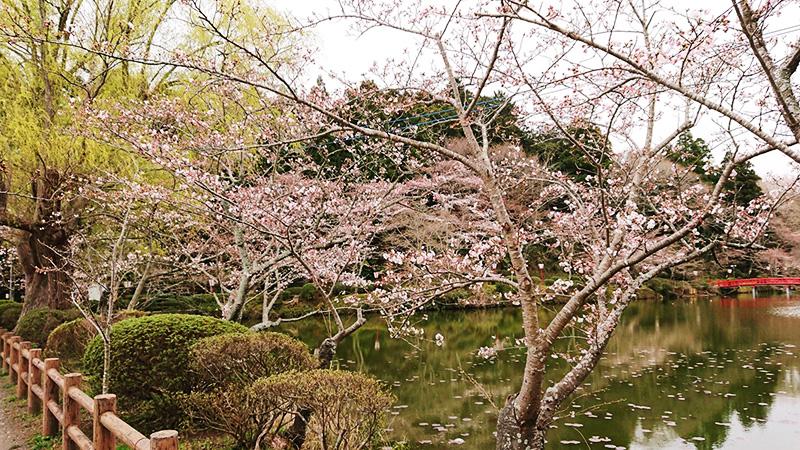 3月23日(金)の開花状況