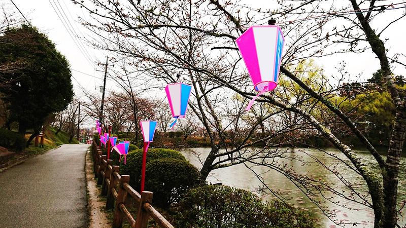 3月20日(火)の開花状況