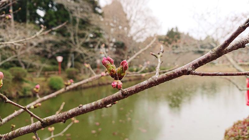 3月16日(金)の開花状況