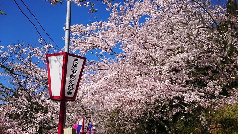 4月14日(金)の開花状況