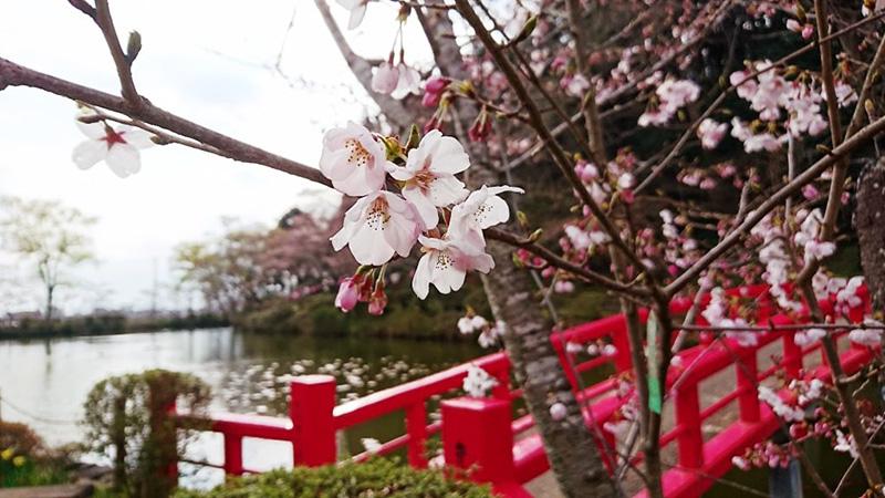 4月03日(月)の開花状況