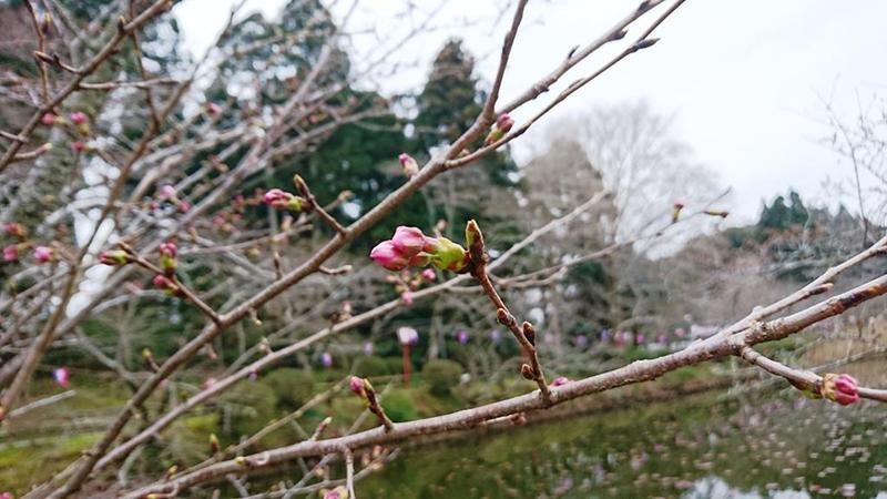 3月24日(金)の開花状況