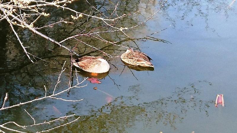 3月22日(水)の開花状況