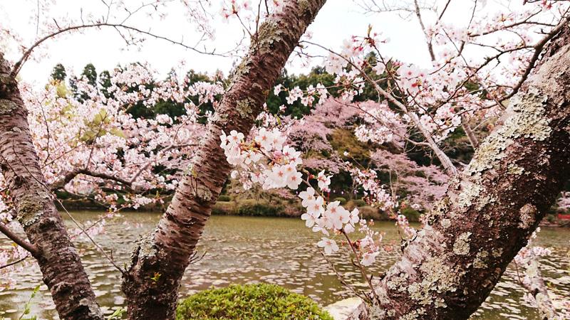 3月30日(金)の開花状況