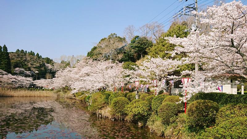 3月28日(水)の開花状況