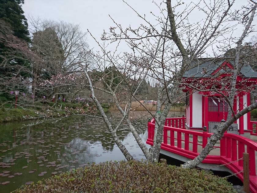 3月24日(木)の開花状況