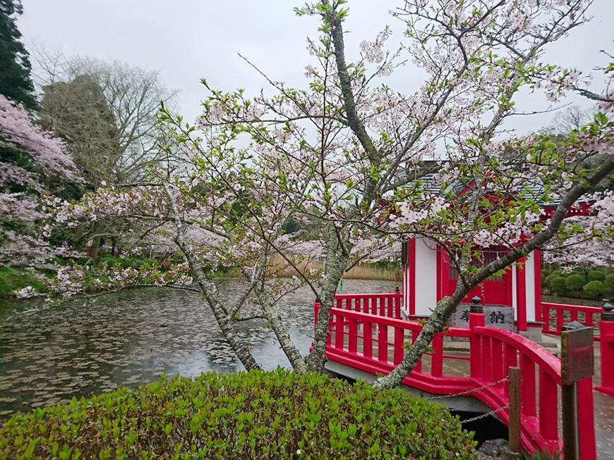 4月07日(木)の開花状況