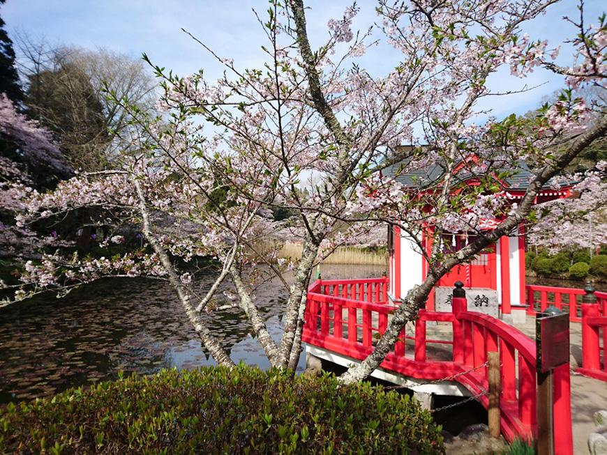 4月06日(水)の開花状況