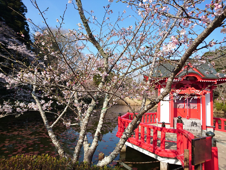 3月31日(木)の開花状況