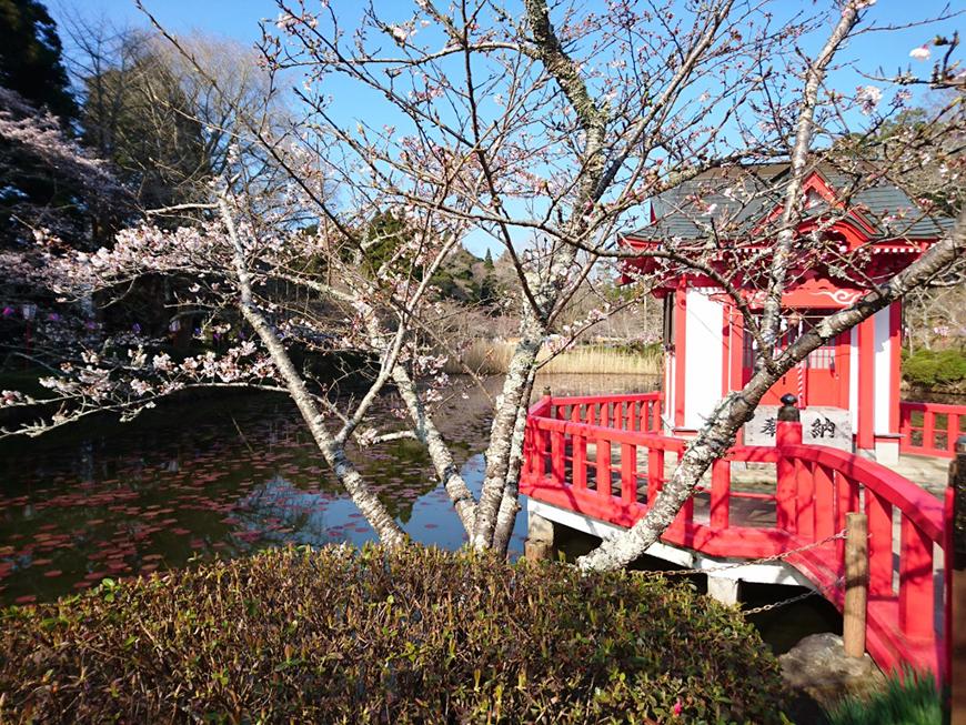 3月29日(火)の開花状況