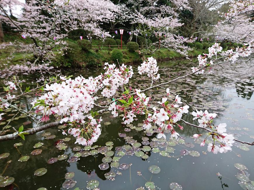 4月05日(火)の開花状況