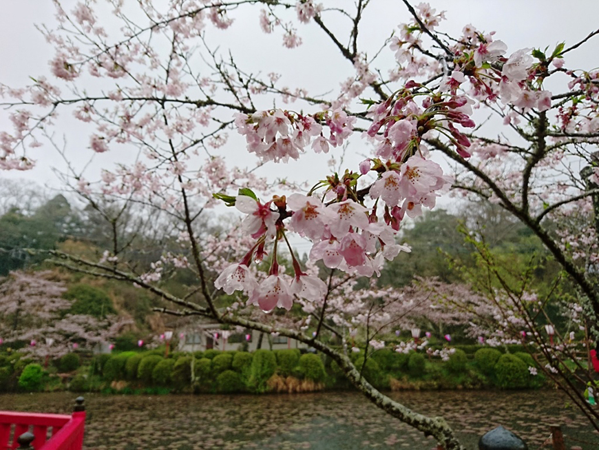 4月04日(月)の開花状況