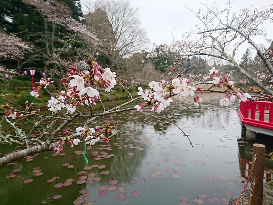 3月28日(月)の開花状況