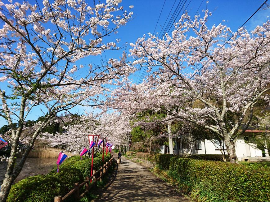 4月08日(金)の開花状況