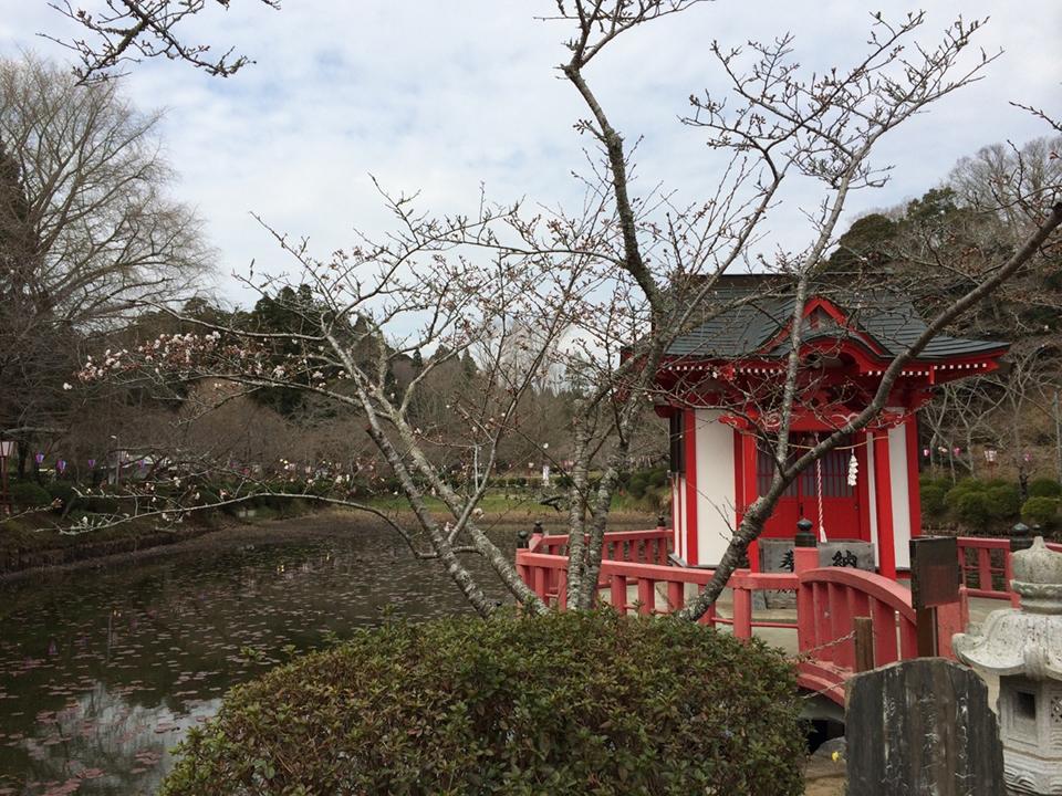 3月26日(水)の開花状況