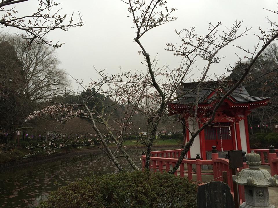 3月27日(木)の開花状況