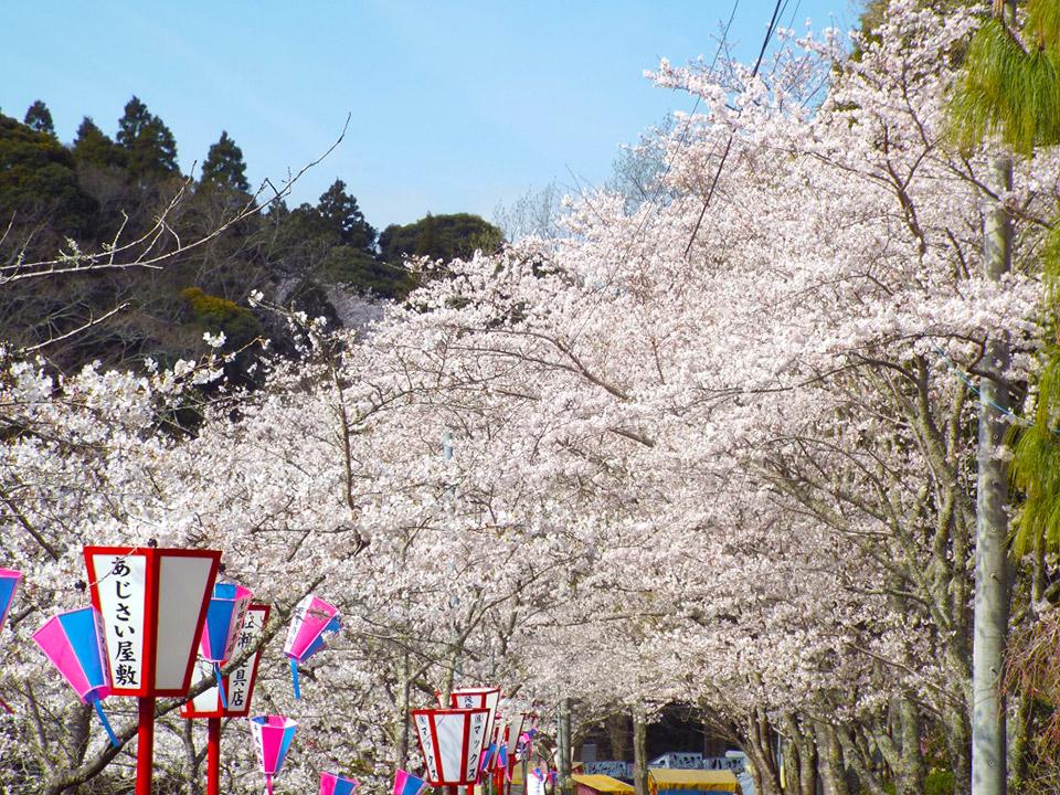 4月01日(火)の開花状況