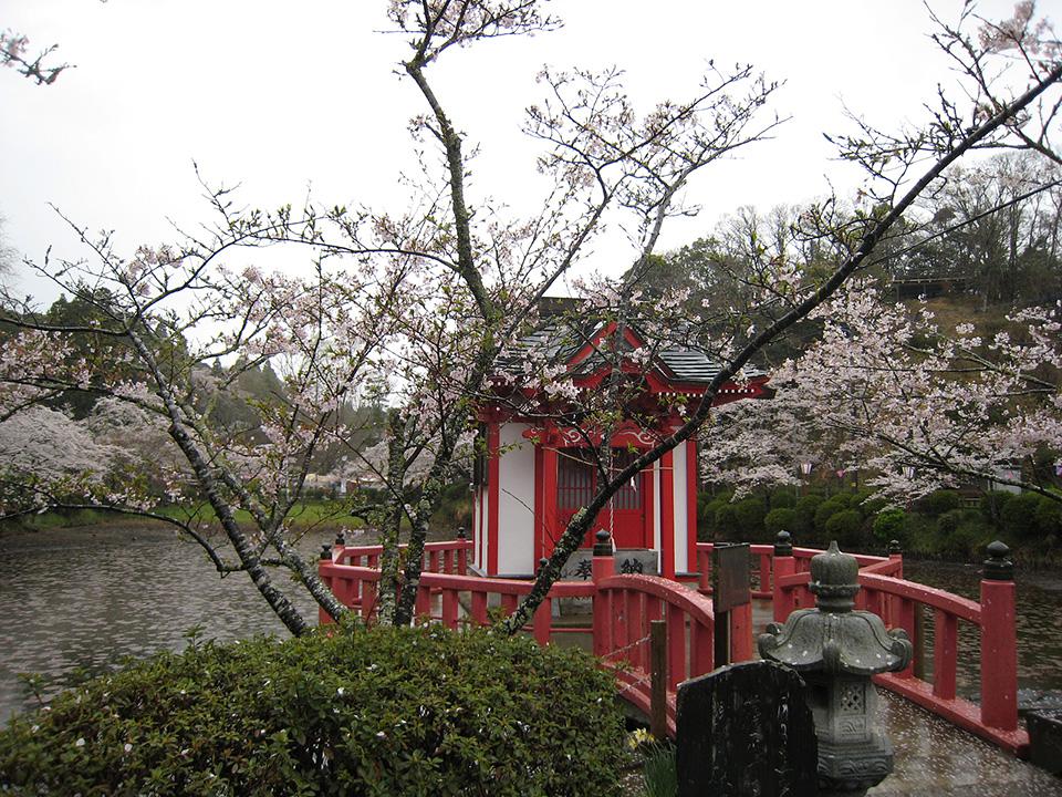 4月03日(木)の開花状況