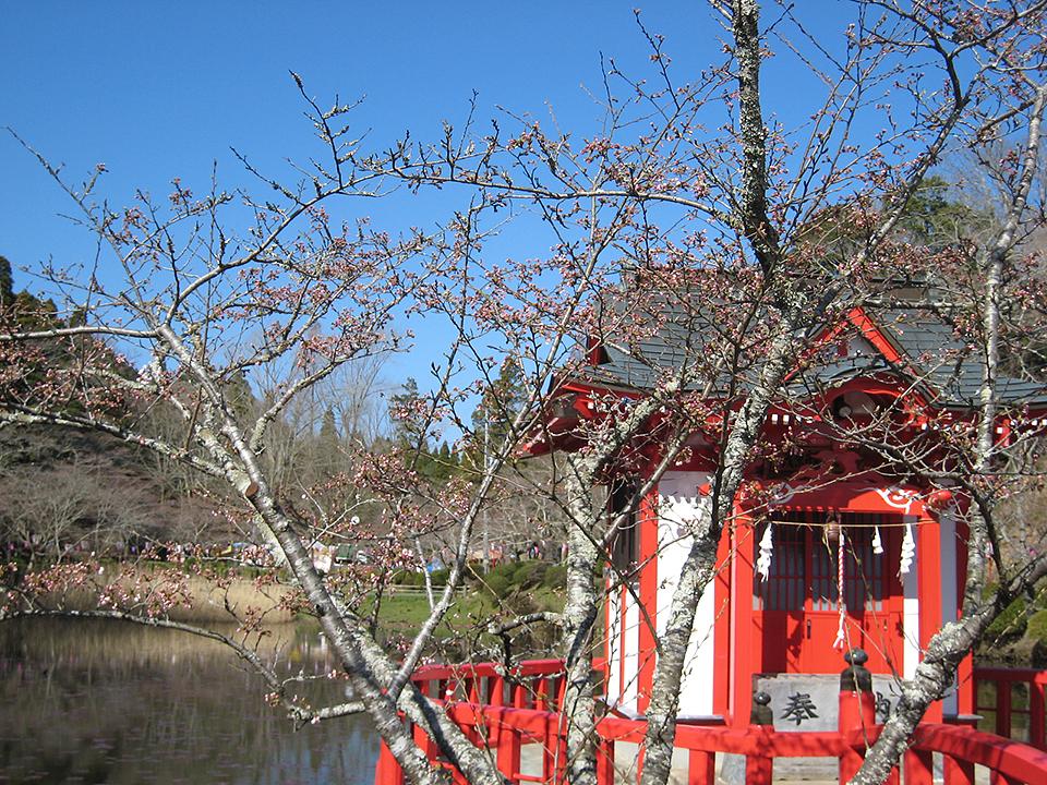 3月26日(木)の開花状況