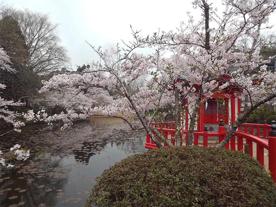 4月01日(水)の開花状況