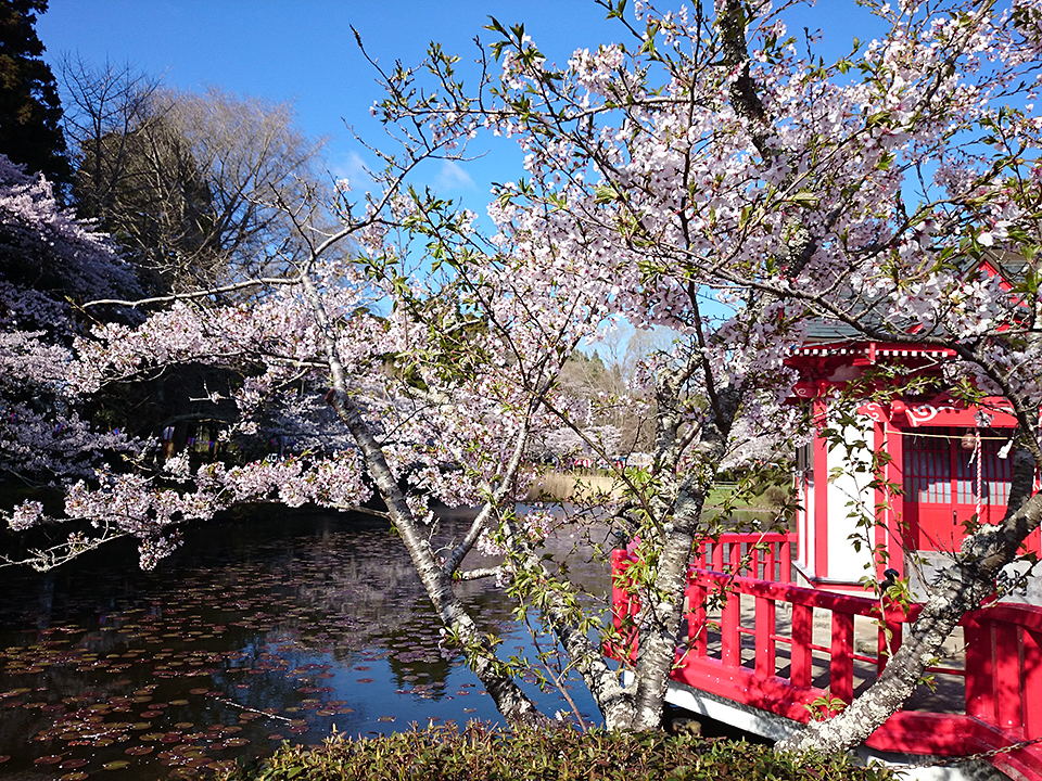4月02日(木)の開花状況