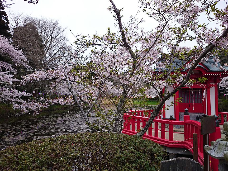 4月03日(金)の開花状況