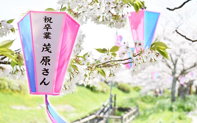 茂原桜まつりボンボリオーナー 一般募集