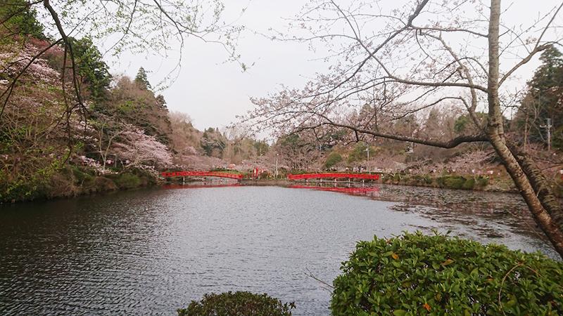 3月28日(木)の開花状況