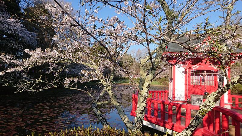 4月02日(火)の開花状況