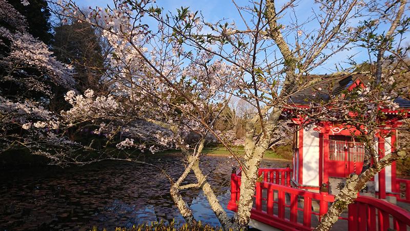 4月04日(木)の開花状況