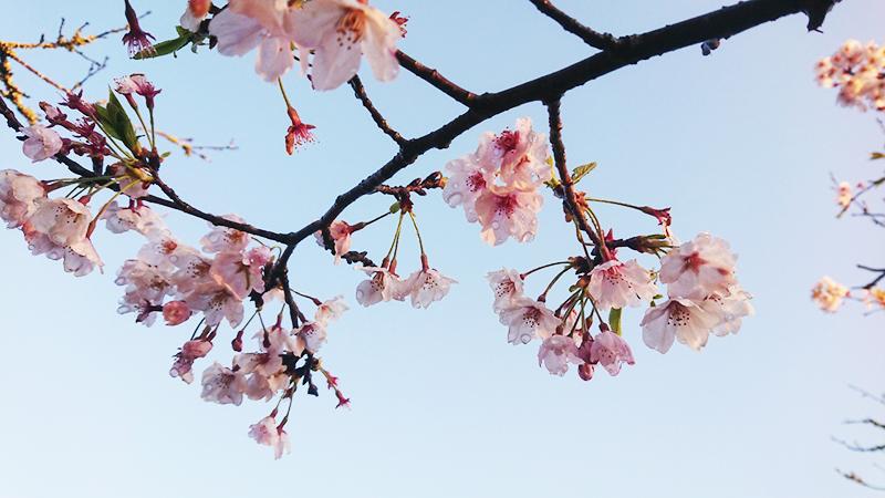 4月09日(火)の開花状況