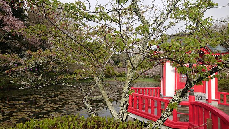 4月11日(木)の開花状況