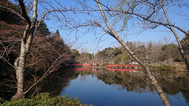 3月18日(水)の開花状況