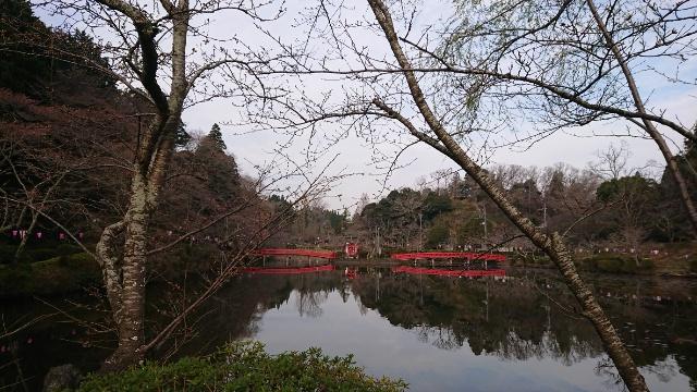 3月19日(木)の開花状況