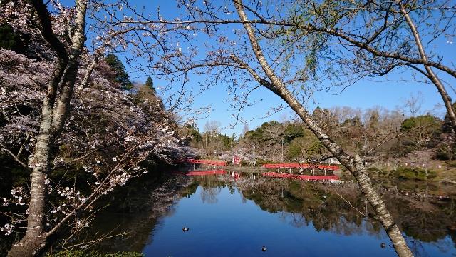 3月25日(水)の開花状況