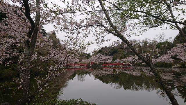3月31日(火)の開花状況