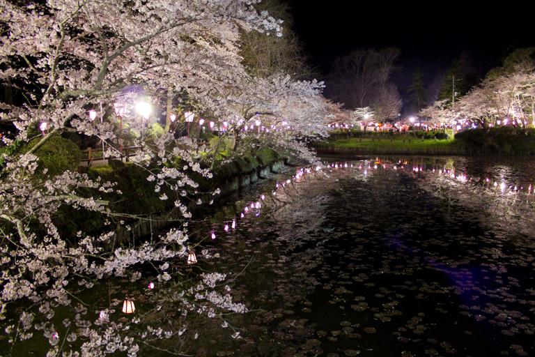 夜桜ライトアップは中止になりました